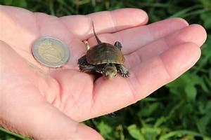 willkommen daheim kleine schildkröten tiergarten