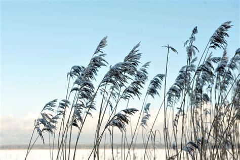 Ceturtdiena būs saulaina un ar nelielu salu | VENTSPILNIEKS.LV
