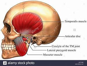 Temporomandibular Joint - Tmj Stock Photo  7710858