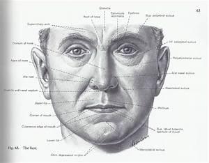 Cheek Bone Anatomy Cheek Anatomy Diagram Human Anatomy