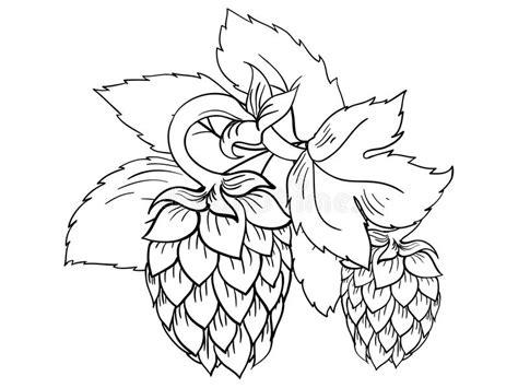 foto de Luppolo stilizzato messo illustrazione vettoriale