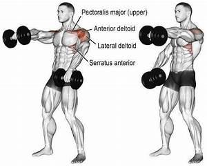 Shoulder Day   Complete Workout Program