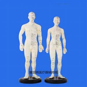 Aliexpress Com   Buy 50cm English Human Acupuncture