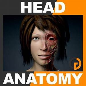 Human Female Head Anatomy By Cgshape  Realistic  Detailed