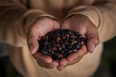 Coffee may be extremely good for your liver. Coffee Can Cut the Risk of Liver Damage Even if You Love ...