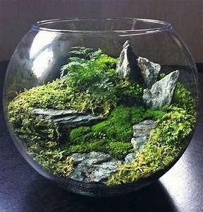 Pflanzen Terrarium Einrichten : ber 40 vorschl ge wie sie ein terrarium selber bauen moss garden 39 s terrarium selber bauen ~ Watch28wear.com Haus und Dekorationen