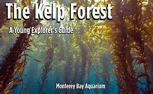 The Kelp Forest  A Young Explorer U0026 39 S Guide Ebook