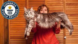 The World's Longest Domestic Cat - Meet The Record ...  Domestic