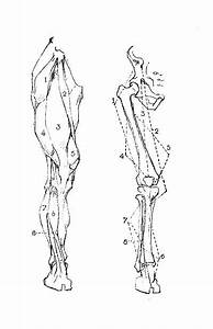 George B Bridgman Constructive Anatomy Pdf