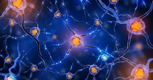 Neuronal Connections And The Chemoaffinity Hypothesis