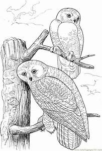 Two, Owls, On, Tree, Coloring, Page