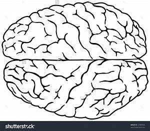 32 Blank Brain Diagram To Label