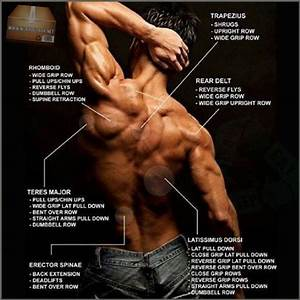 Full Back Workout Plan - Healthy Fitness Body Exercise Week Low - Project Next