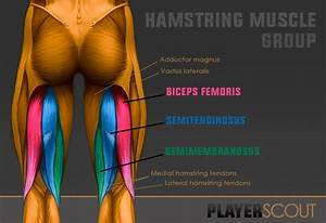 Football Hamstring Injury  The Ultimate Guide