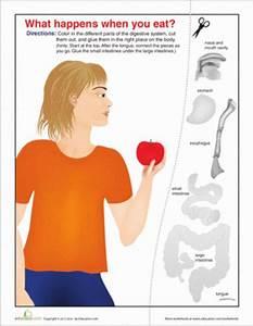 Fifth Grade Life Science Worksheets  Human Digestive