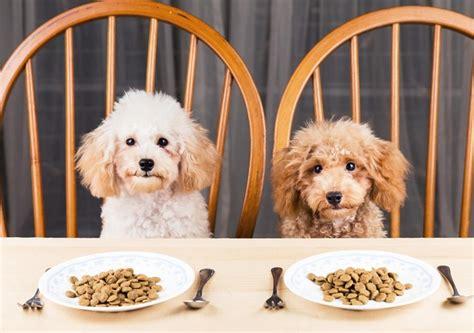 Lēta suņu barība noved pie dārgiem veterinārajiem ...