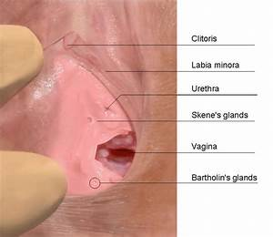 Of Prostate Glands