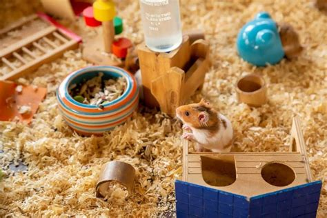 Hamsters papers and research , find free pdf download from the original pdf search engine. Hamster Facts Sheet / Hamster Care 101 River Landings Animal Clinic In Bradenton Florida