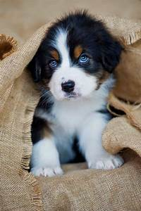 25+ best ideas about Cutest dog breeds on Pinterest ...