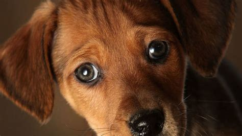 Or if you need to play, pet or snuggle cats! Colorado lawmakers discussing banning sales of dogs and ...