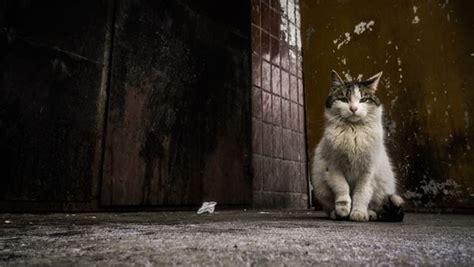 หญิงญี่ปุ่นดับหลังถูกแมวจรจัดกัด จนติดเชื้อไวรัสจากเห็บใน ...
