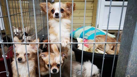 Drīzumā varēs adoptēt 57 no dzīvokļa Pārdaugavā izņemtos ...