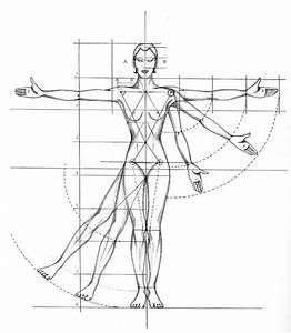 Beginner U00b4s Guide  Importance Of Proper Body Proportions