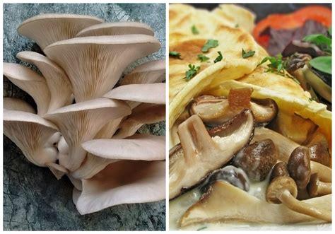 dzivei.eu - Austersēnes. Garšīga maltīte, kas stiprina ...