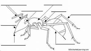 Ant Anatomy Diagram To Label