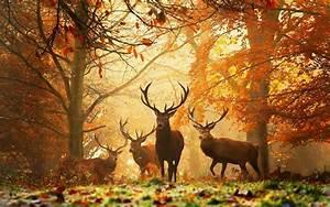 Bilder Herbst Kostenlos : download bilder f r das handy tiere herbst wild kostenlos 20525 ~ Somuchworld.com Haus und Dekorationen