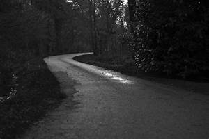 Free, Images, Tree, Forest, Path, Snow, Light, Black, And, White, Night, Sunlight, Morning