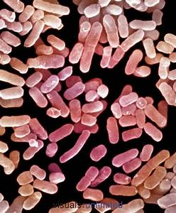 These Bacteria  Klebsiella Pneumoniae  Live In The