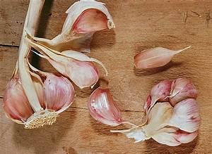 Planter Ail Rose : planter l 39 ail ~ Nature-et-papiers.com Idées de Décoration