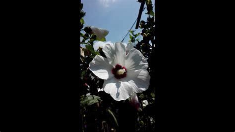 floare alba - YouTube