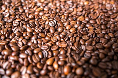 Coffee trees thrive along the bean belt, which is the zone between 25 degrees north and 30. FREE IMAGE: Coffee beans | Coffee beans, Beans, Coffee benefits