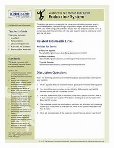 Teacher U0026 39 S Guide  Endocrine System  Grades 9 To 12