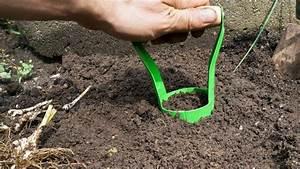 Blumenzwiebeln Pflanzen Frühjahr : blumenzwiebeln pflanzen ausgraben vermehren und umpflanzen anleitung ~ A.2002-acura-tl-radio.info Haus und Dekorationen