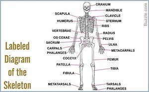 Labeled Human Body