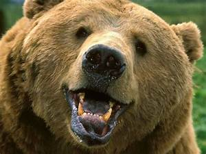 10 Facts About Grizzly Bears