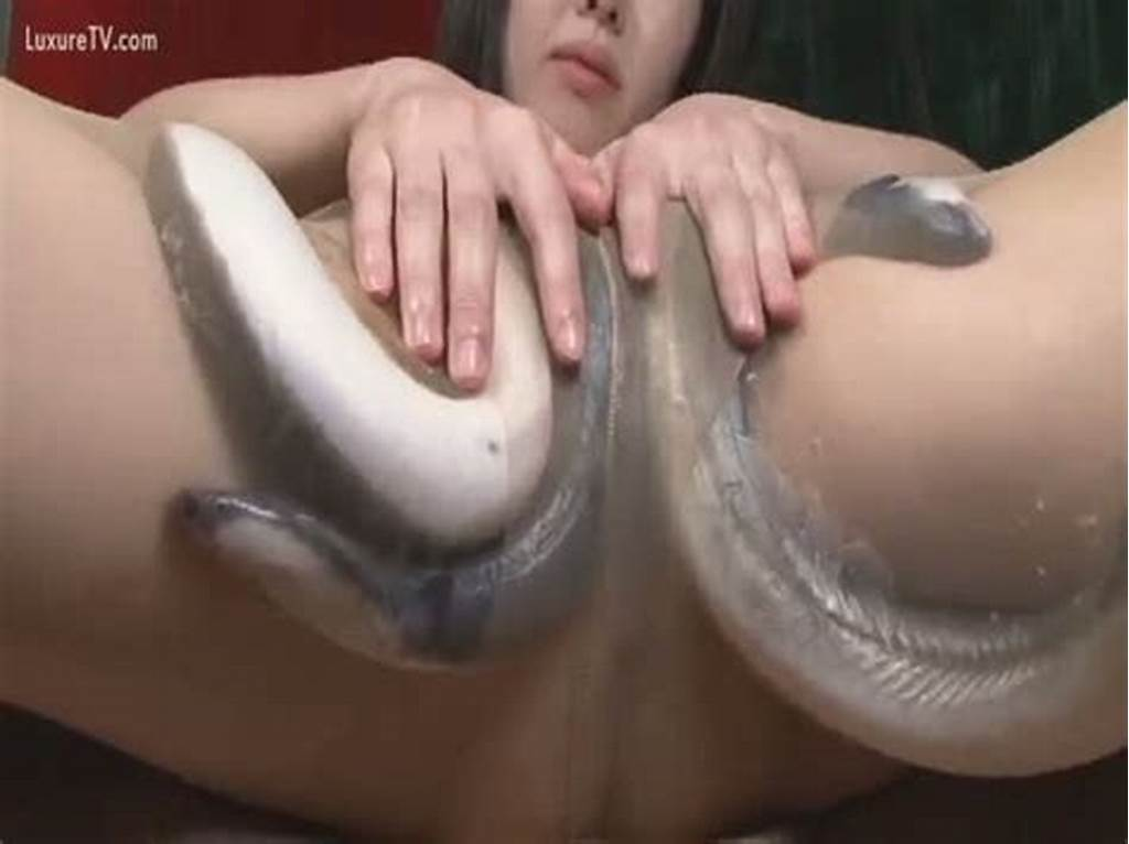 #Eels #Playing #With #A #Cum
