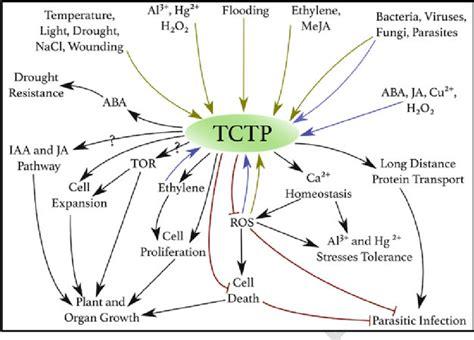 4 Schematic representation of the multiple stimuli affecting TCTP...   Download Scientific Diagram