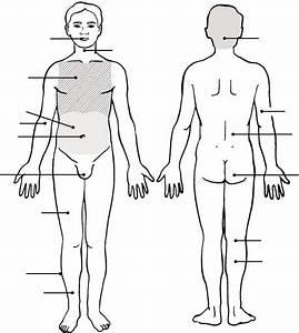 Human Anatomy And Physiology Laboratory Manual  12  E