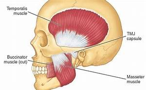 Tmj  Jaw Pain   Two Release Techniques