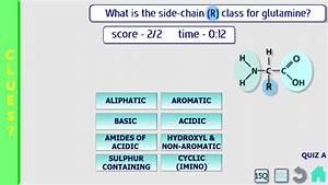 Amino Acids  Biochemistry