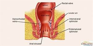Function Of Anal Canal