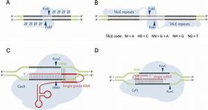 Schematic Representation Of Targetable Nucleases For