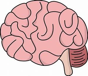 Brain Cliparts Transparent Free Download Clip Art Free ...