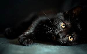 Black Cats HD Wallpapers Beautiful Pictures & Images HD