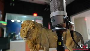 Spotlight Animation Next Lion King 2d Animation Real Animal Voices