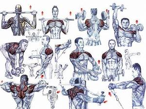 Bodybuilding Exercises